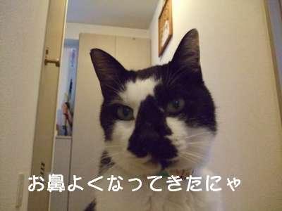 20070915sasuke2.jpg