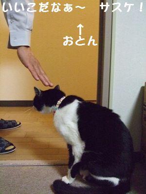 20070929sasuke.jpg