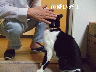 20070929sasuke2.jpg