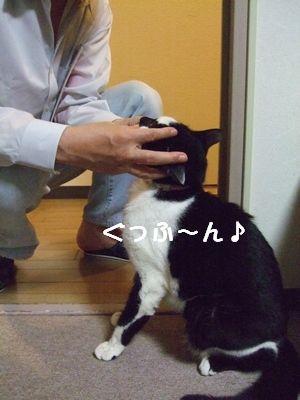 20070929sasuke3.jpg