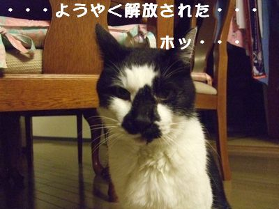 20070929sasuke5.jpg
