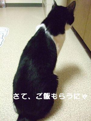 20070929sasuke6.jpg