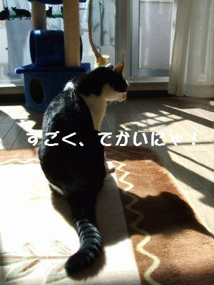 20071002sasuke2.jpg