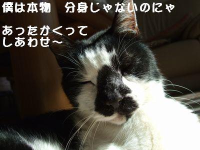 20071002sasuke4.jpg