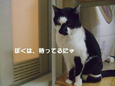 20071005sasuke2.jpg