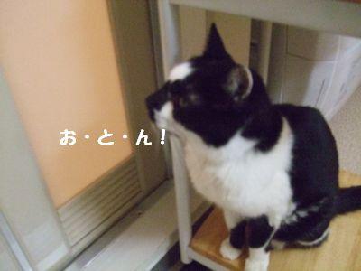20071005sasuke4.jpg
