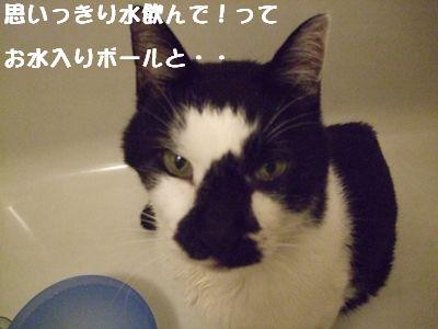 20071012sasuke4.jpg
