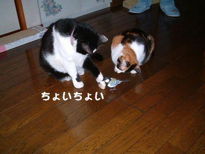 20071101sasukemikan6.jpg