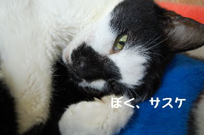 20071106sasuke.jpg