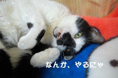 20071106sasuke2.jpg