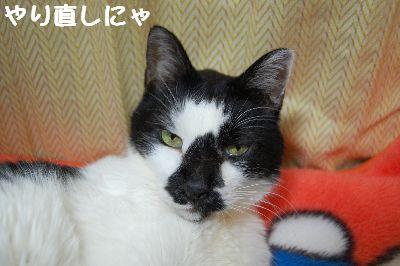 20071106sasuke4.jpg