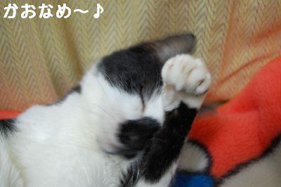 20071106sasuke6.jpg