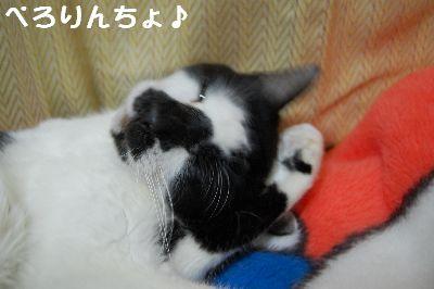 20071106sasuke7.jpg