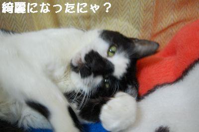20071106sasuke8.jpg