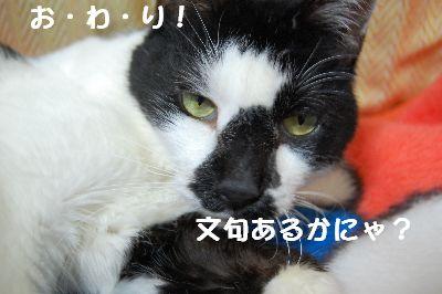 20071106sasuke9.jpg