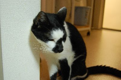 20071108sasuke2.jpg