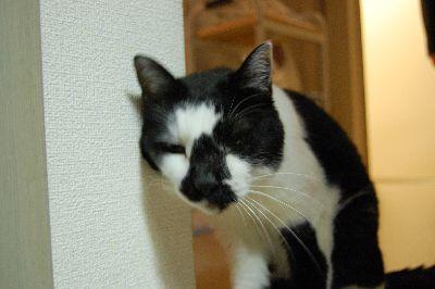 20071108sasuke4.jpg