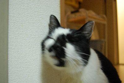 20071108sasuke5.jpg