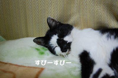 20071111sasuke3.jpg