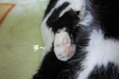 20071111sasuke4.jpg