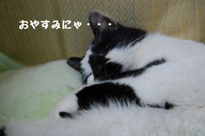20071111sasuke7.jpg