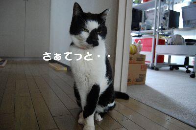 20071114sasuke2.jpg