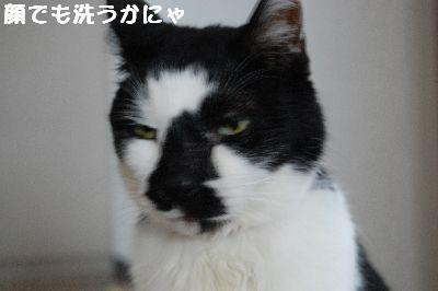 20071114sasuke3.jpg