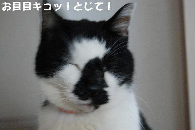20071114sasuke5.jpg