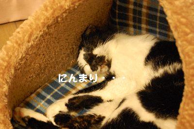 20071205sasuke3.jpg