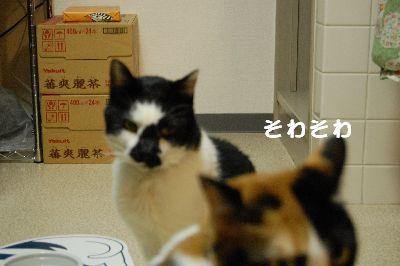 20071207sasukemikan2.jpg