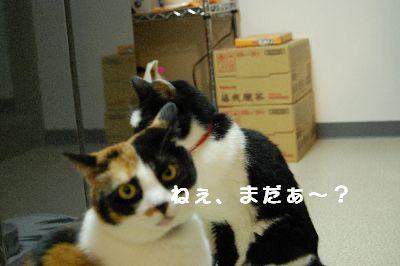 20071207sasukemikan5.jpg