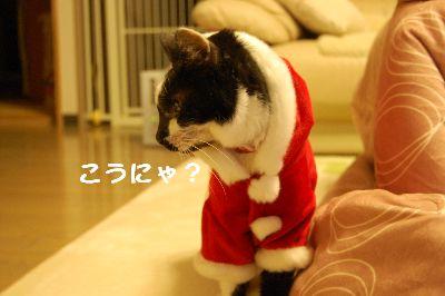 20071213sasuke3.jpg