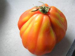 tomatoto.jpg