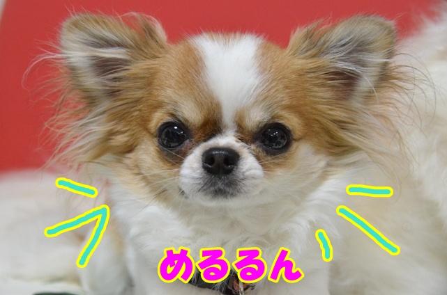 DSC_5826.jpg