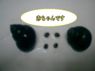 20070725230149.jpg