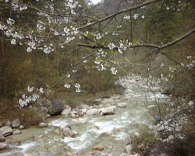 春の川(2000年)