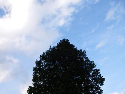 うちの前の大きな木