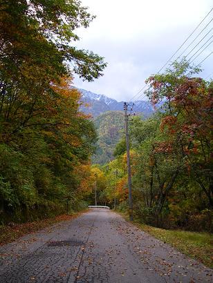 落ち葉舞う道路