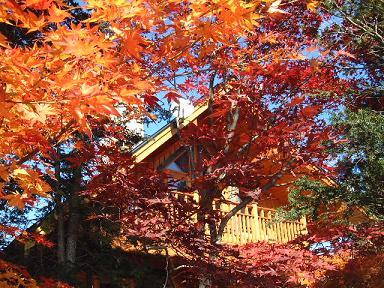 秋の我が家