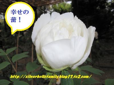 P5030019_20110508031956.jpg