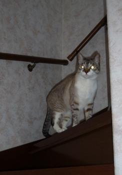 また2階へ。