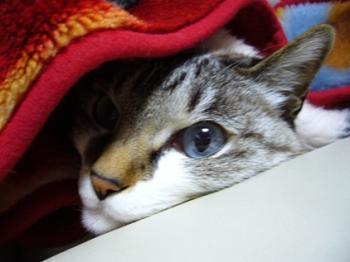 この寒いのに・・。