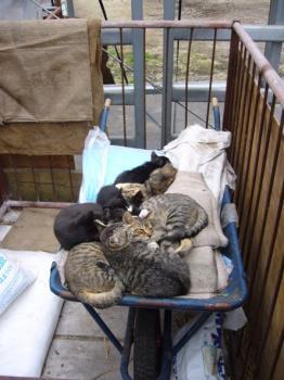 子ネコがいっぱい。