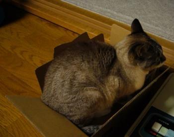 箱入りネコ。