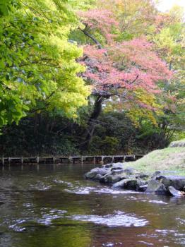 紅葉、名水百選。
