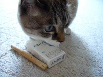 にゃんちとタバコ。