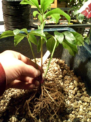専用用土&肥料3