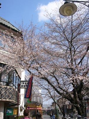 桜咲く劇場