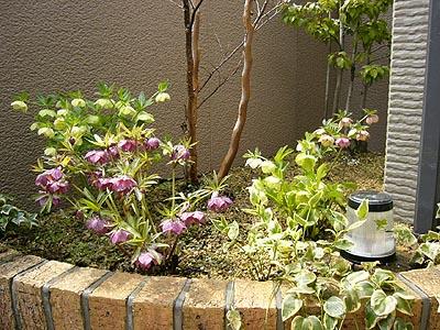 テラス花壇2