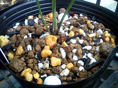 緩効性肥料2